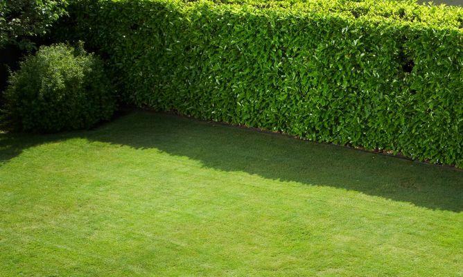 Ginkgo paisajismo cercos vivos for Cercados jardin